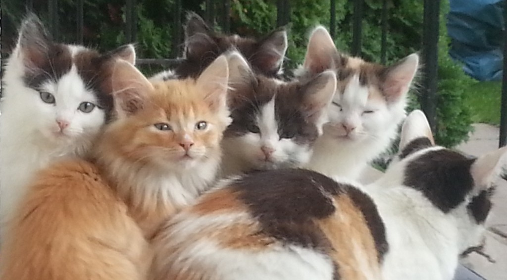 Lollo-med-kattungar-1024x565